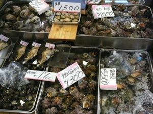 Molluscs galore