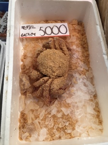 Crab (hairy?)