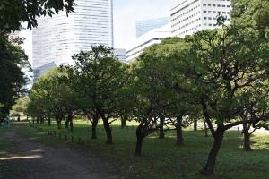 Ume grove