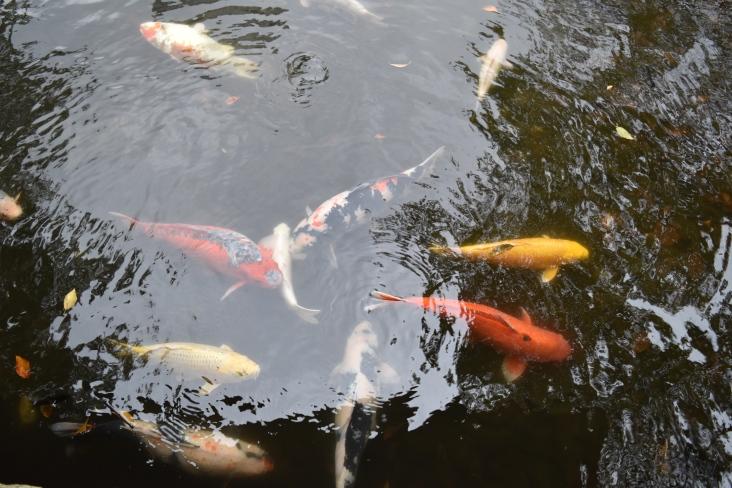 Around the grounds of Yasukuni-Jinja