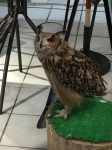 Owl at the Owl Cafe